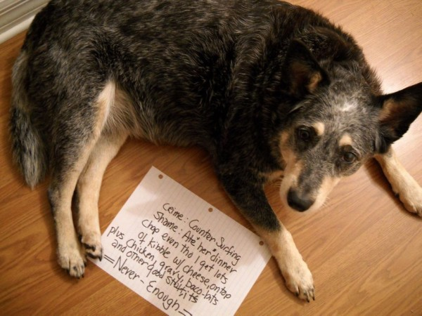 Guilty Dogs With Written Signs