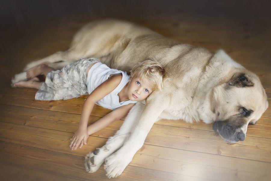 Kids and Animals in the Photographs of Elena Shumilova