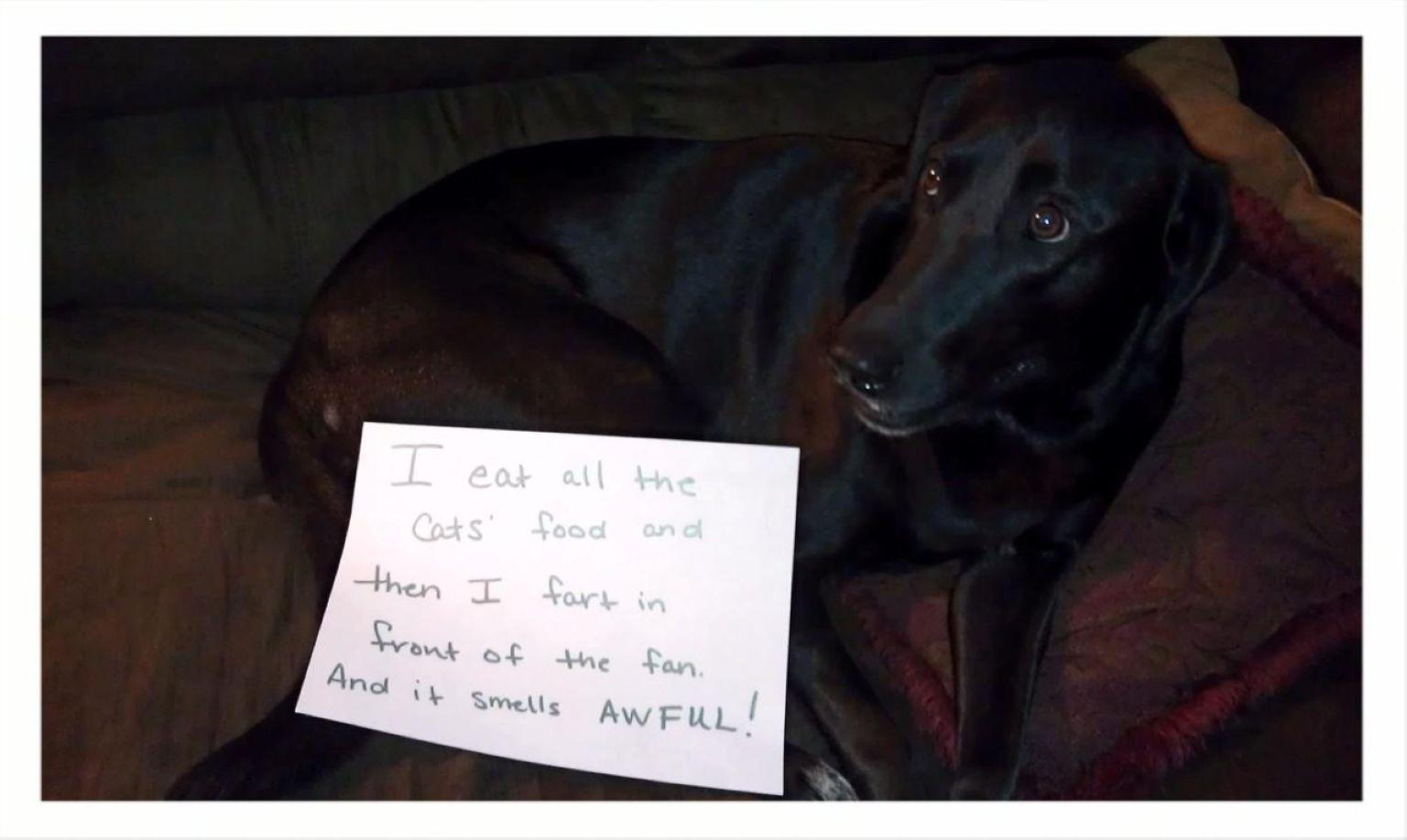 Dogs Admit Their Secrets in Public