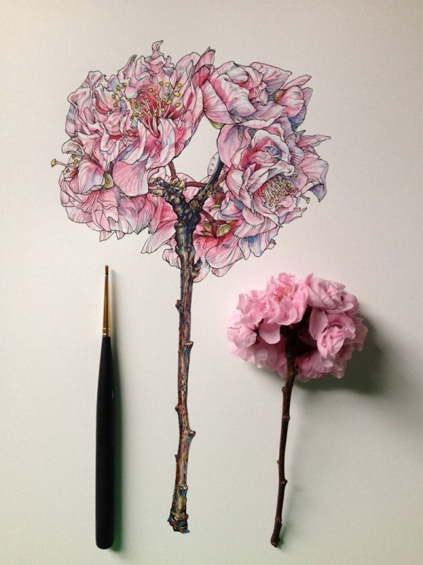 Flowers in Progress: Scientific Illustrator Noel Badges Pugh Taunts Us with Spring