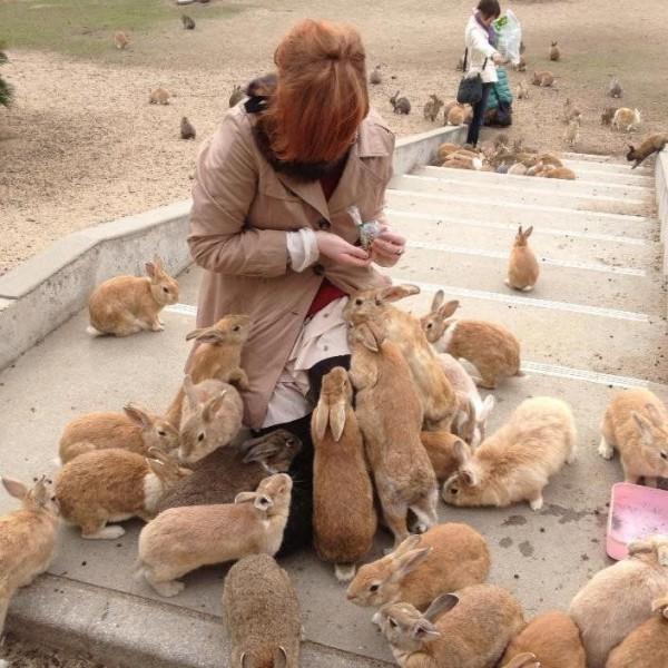 So Cute Rabbit Island Japan Island Okunoshima