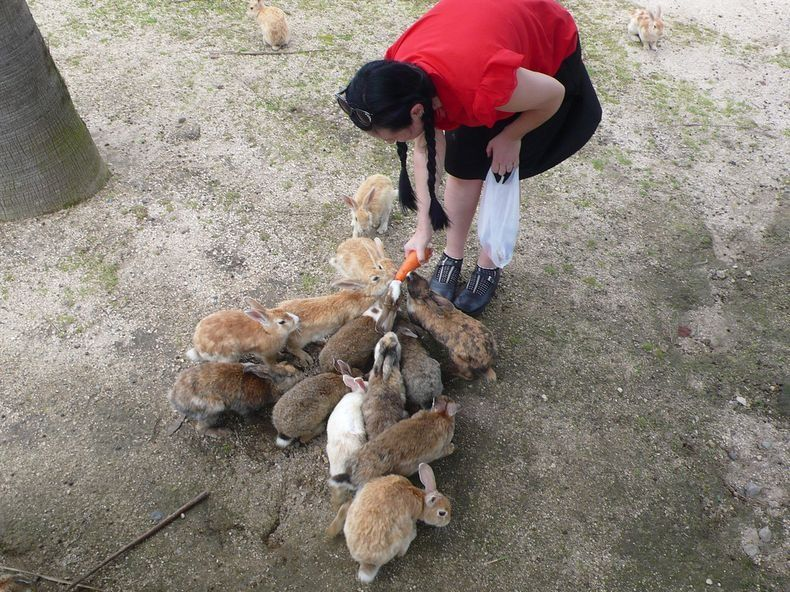 ÅŒkunoshima Rabbits Island
