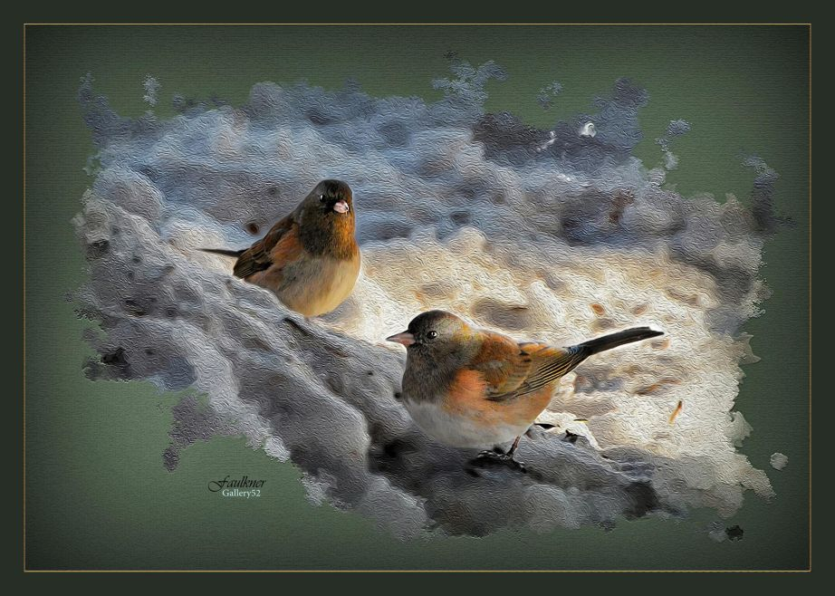 2 Juncos last Sunday under a feeder in the front yard