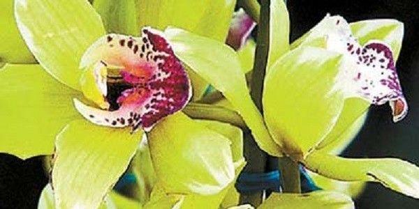 3. Shenzhen Nongke Orchid (1.68 million Yuan or $200,000 approx)