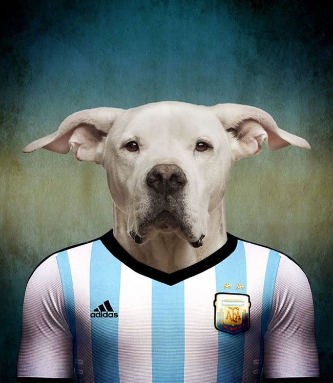 Dogs of FIFA Cup 2014