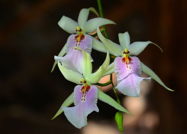 Devonian Botanical Garden flowers