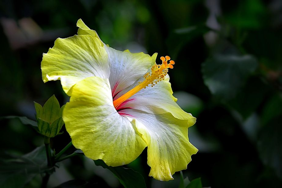 If I was a bee I'd be all over this beauty :)! my second fav