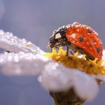 Enchanting Macro Photography: Raindrops and Ladybugs by Alejandro Ferrer Ruiz