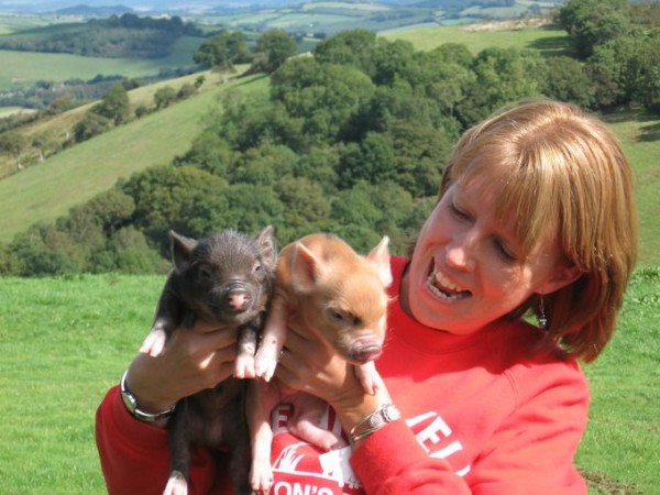 Tiny Pigs at Pennywell Farm