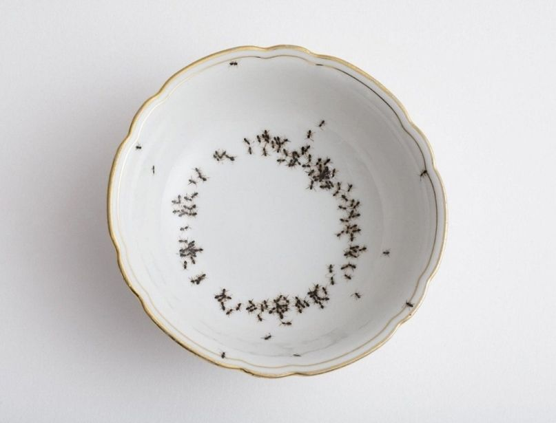 Creepy Porcelain Dishes Covered in Hordes of Hand-Painted Ants by Evelyn Bracklow