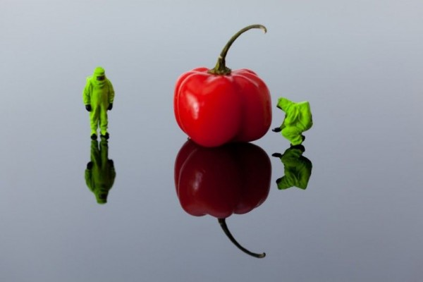 David Gilliver Captures Incredible Macro-Photography of Little People Doing Big Jobs