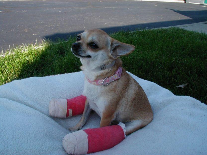 Disable Animal