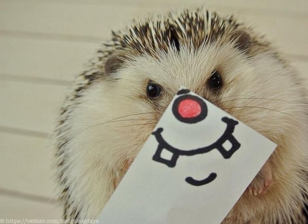 Adorable Hedgehog Hilariously Disguised with Illustrated Masks