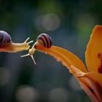 Astounding Macro Photographs of Snails by Vyacheslav Mishchenko