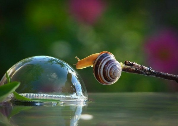 Macro Photographs of Snails