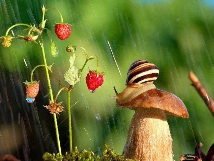 Miniature World of Snails