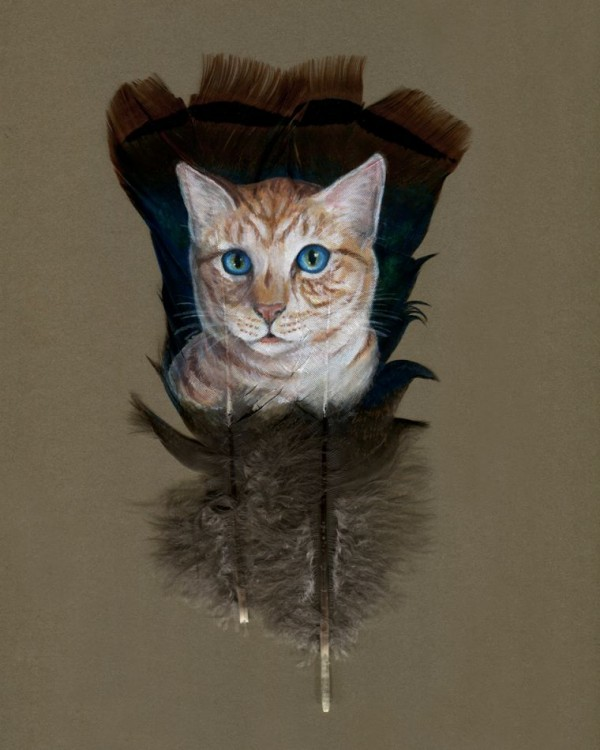 Cat Feather
