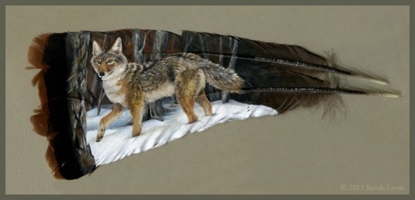 Coyote feathers