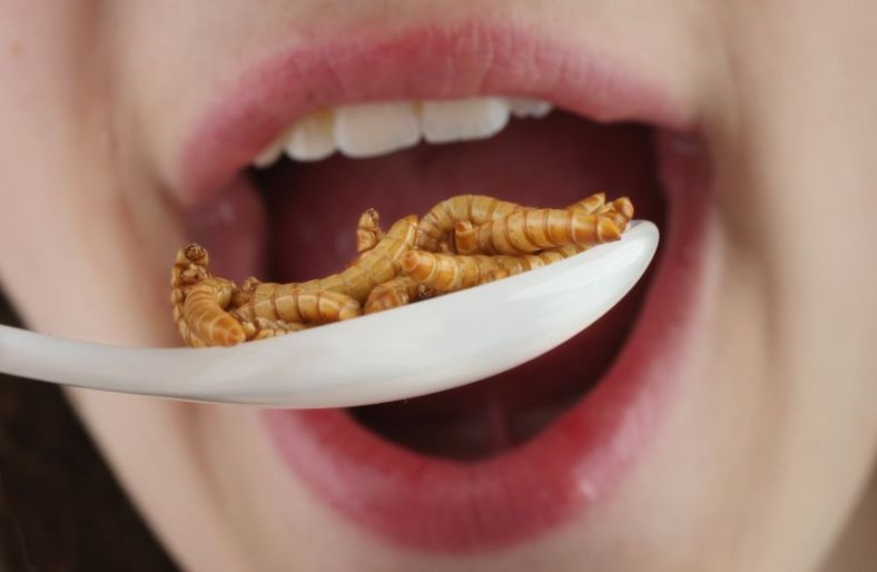Creepy and Edible Food for Humans