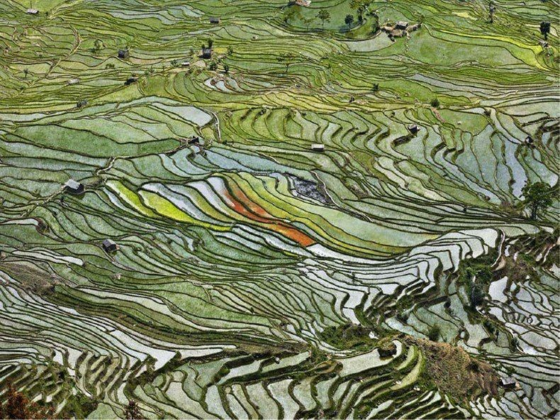 Rice cultivation in Yunnan Province, China