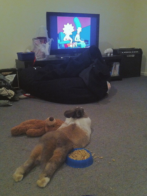 04-With This bun enjoying some nightly cartoons