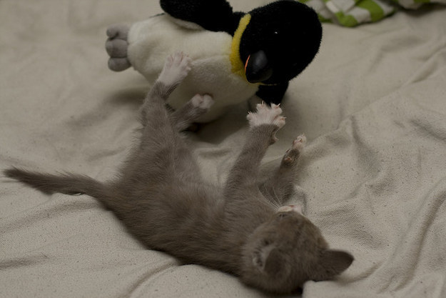 11-With This kitten and her penguin
