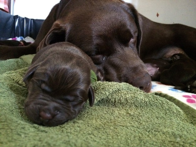 13-With This mother and her newborn pup
