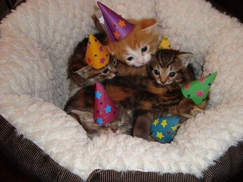 14-With This kitten party