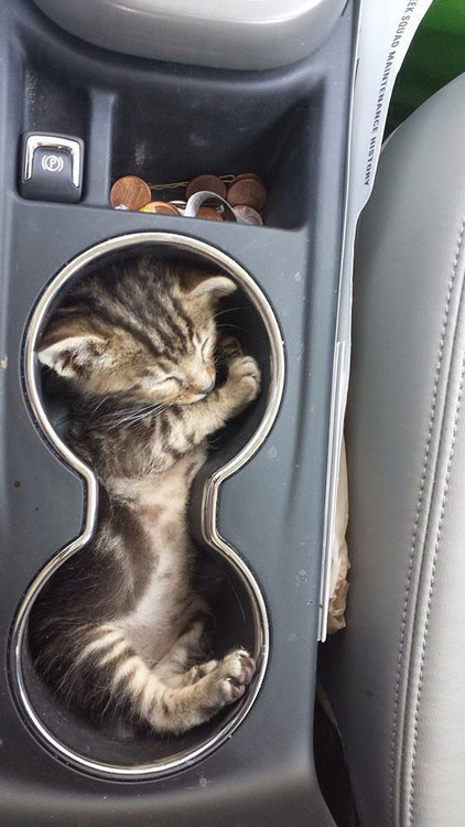 18-With This perfect cat in his holder
