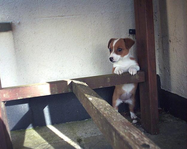 24-With This Super Cute Corgi Pup