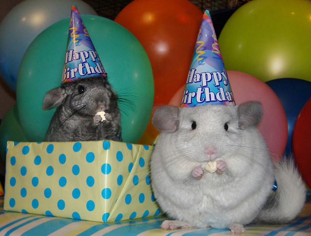 28-With These Ever Cute Happy Birthday Bunnies