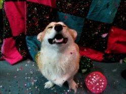 5-Look how happy this Corgi is