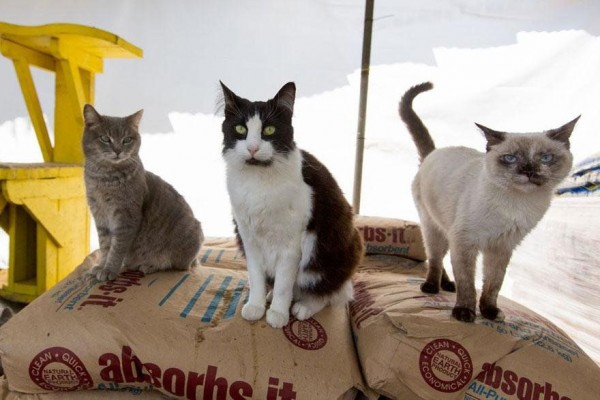 The World's Largest No-Kill Cat Sanctuary Has Saved over 24000 Feline Friends