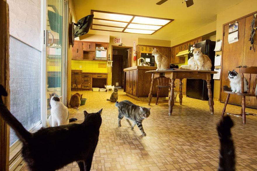 The World's Largest Shelter for Cats