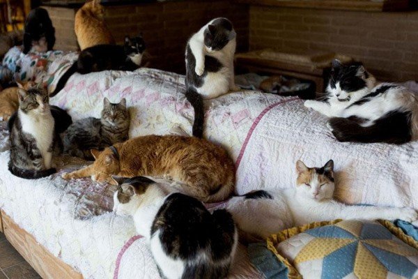 The World's Largest No-Kill Cat Sanctuary