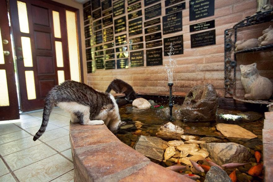 Largest Cat Rescue on Earth