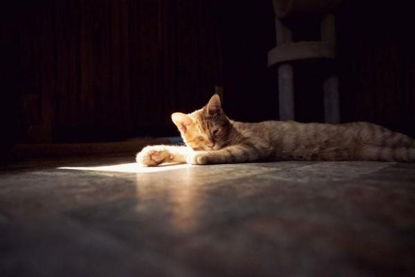 No-Kill Cat Sanctuary (6)
