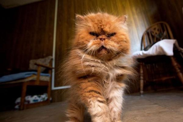 No-Kill Cat Sanctuary (7)