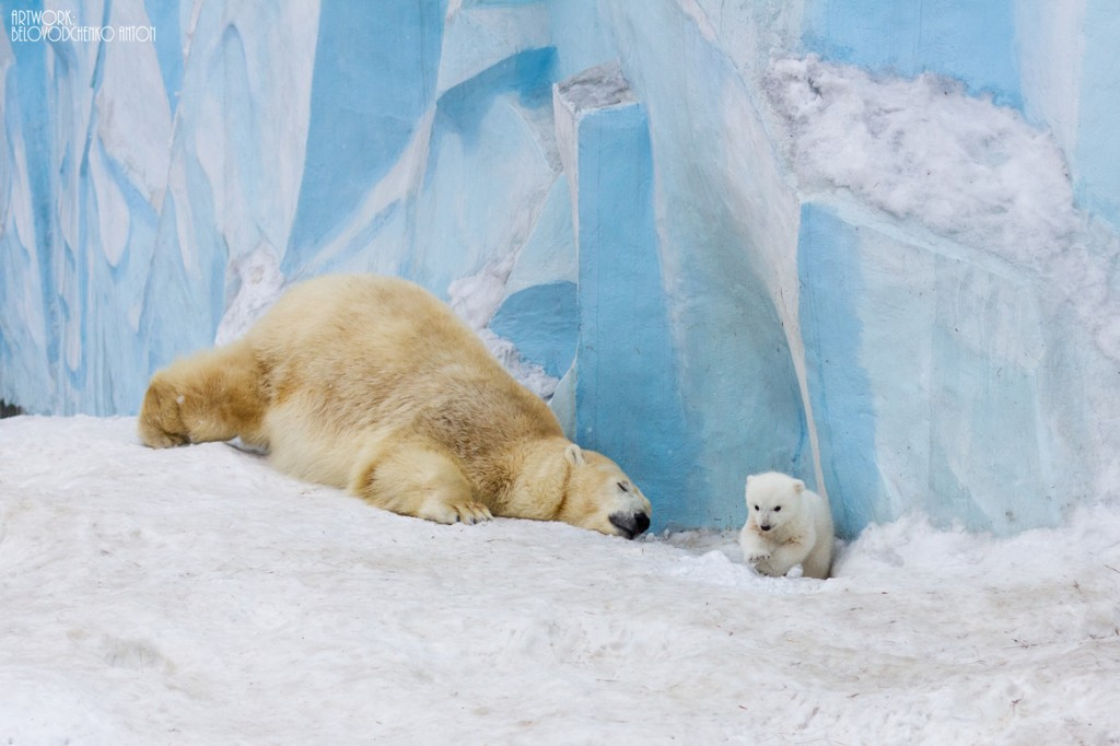 Now citizens and guests of Novosibirsk have an opportunity to watch this lovely creature.
