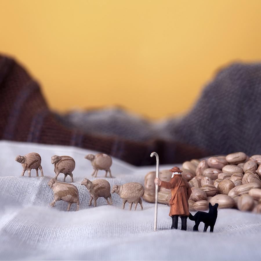 Sheep Beans Field