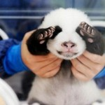 23 Shy Animals Who Are Too Adorable For Their Own Good