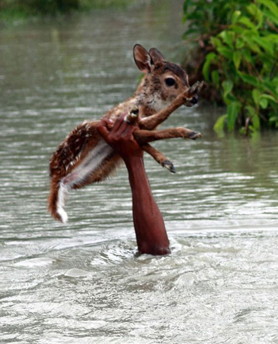 This Baby Deer Rescue