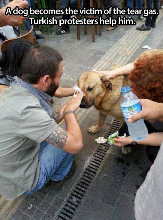This Help Of Tear Gas Victim Dog