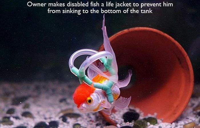 This Help of Disabled Fish