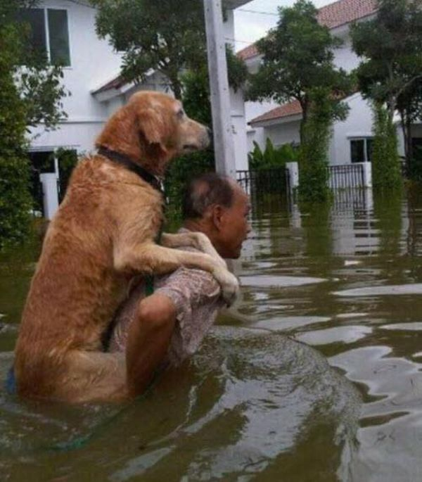 This Man Carrying His Dog Through The Deep Waters