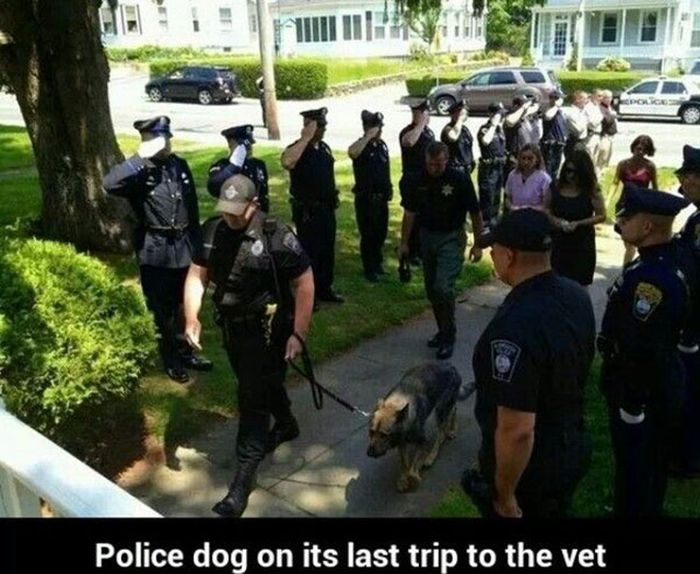 This Respect For Police Dog