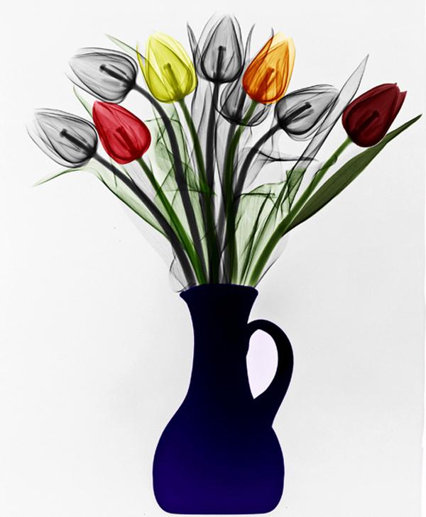 Again Tulips