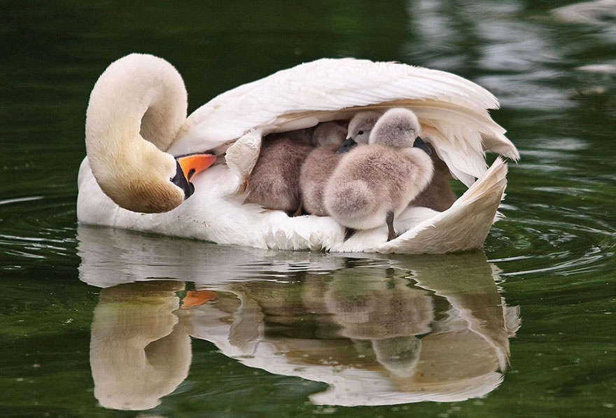 Animal Parenting-02