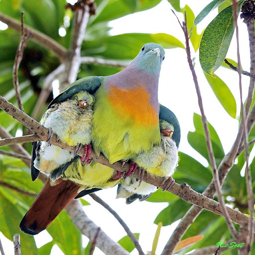 Animal Parenting-04