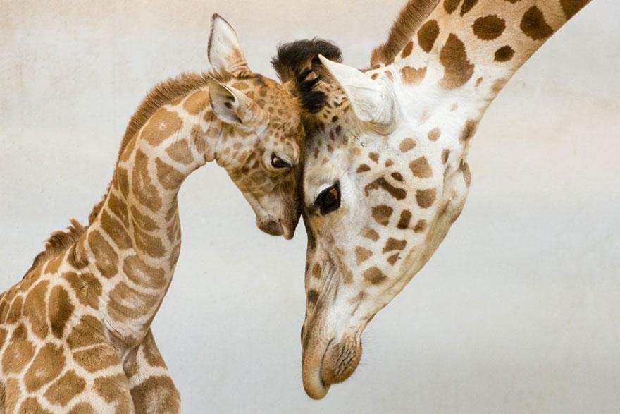 Animal Parenting-05